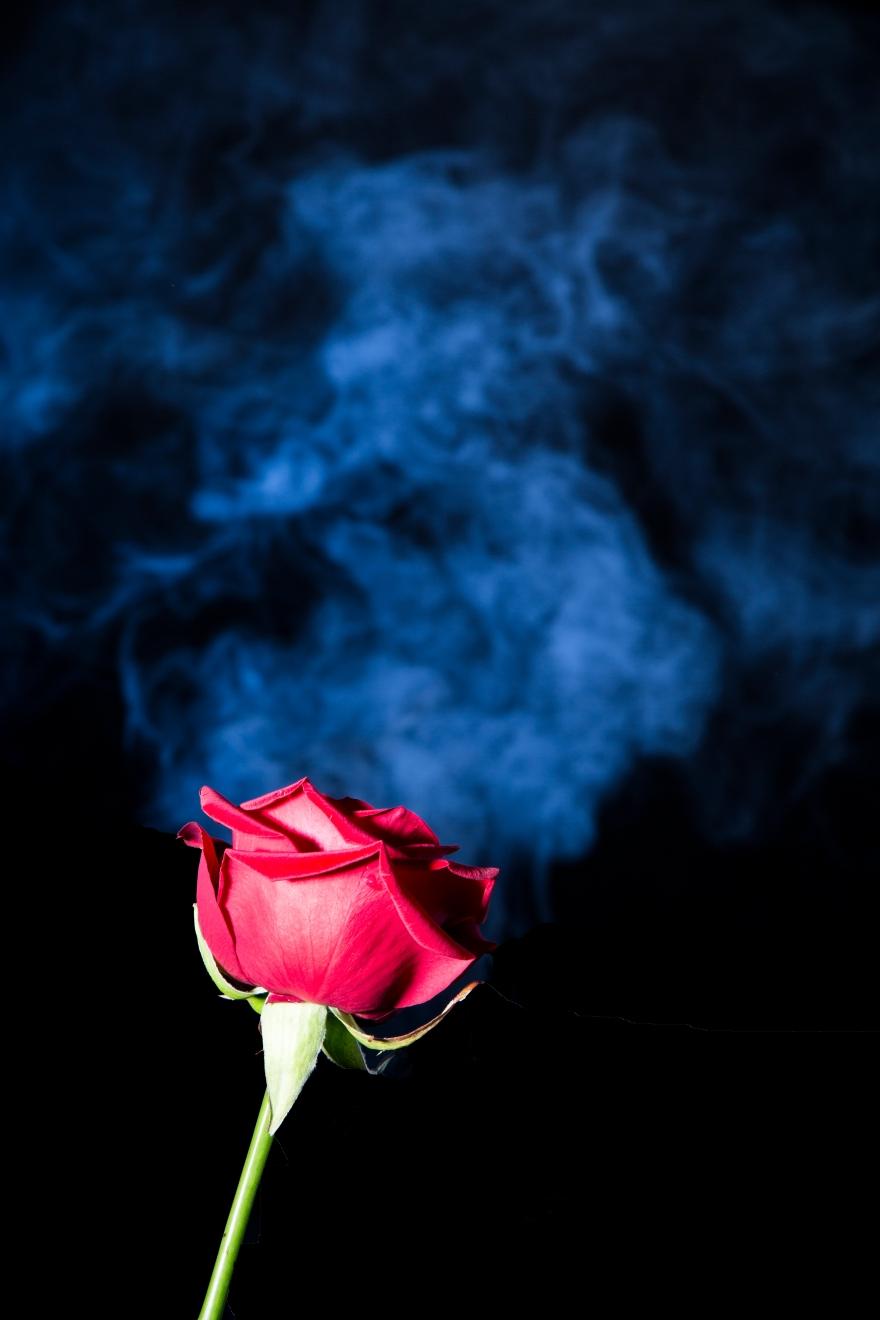 SMOKING ROSE